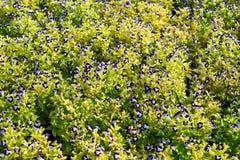 花在庭院背景中 免版税图库摄影