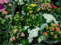 花在庭院部门超级市场 库存照片