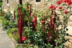 花在庭院里被加强的中世纪教会在Malancrav,特兰西瓦尼亚 库存照片