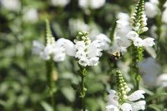 花在庭院里,加拿大 免版税库存图片