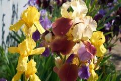 花在庭院里 库存图片