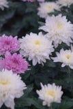 花在庭院里 库存照片