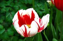 花在庭院里 免版税库存照片