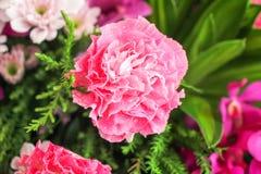 花在庭院里 免版税图库摄影