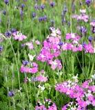 花在庭院里 免版税库存图片