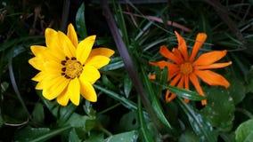 花在庭院,加拿大里 库存照片