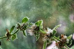 花在我的庭院里,被采取在雨以后 免版税库存图片