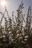 花在春天阳光下。 图库摄影