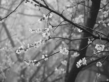 花在春天 图库摄影