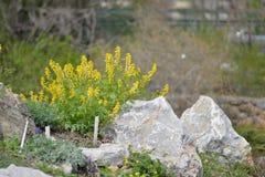 花在春天 免版税图库摄影