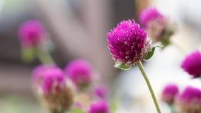 花在有软的焦点的庭院里 库存照片