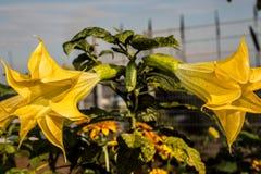 花在植物园里 免版税库存照片