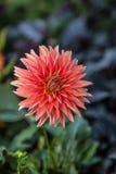 花在植物园里 图库摄影