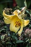 花在植物园里 库存图片