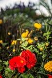 花在植物园里 免版税库存图片