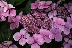 花在植物园里 免版税图库摄影
