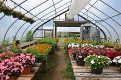 花在温室增长在新罕布什尔 库存图片
