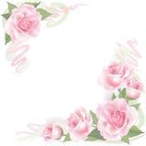 花在白色背景的罗斯框架。花卉装饰。 免版税库存照片