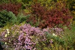 花在秋天公园 库存照片