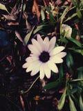 花在秋天 库存照片