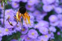 花在秋天 图库摄影
