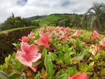 花在绿色海岛 库存图片