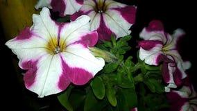 花在美好的颜色增长 影视素材