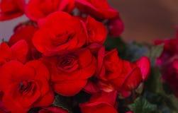 花在花束的室杜娟花画象  玫瑰,不同的颜色,顶视图花束  免版税库存图片