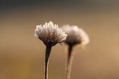 花在草甸早晨 库存图片