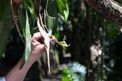 花在超现实的植物园里 免版税库存图片