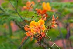 花在里约热内卢巴西植物园里  库存照片
