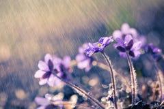 花在雨中 免版税库存照片