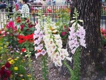 花在香港迪斯尼乐园 图库摄影