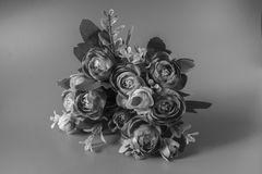 花在黑白背景 库存照片