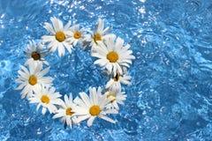 花在水中 免版税库存图片