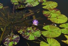 花在水中 免版税图库摄影