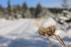 冻花在12月太阳早晨 免版税库存照片