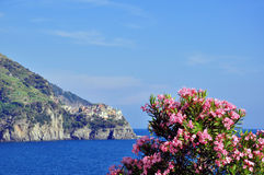 花在Corniglia, Cinque Terre 图库摄影