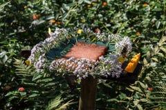花在KuangSi蝴蝶公园的花蜜驻地 老挝luang prabang 库存照片