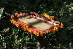 花在KuangSi蝴蝶公园的花蜜驻地 老挝luang prabang 库存图片