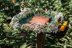 花在KuangSi蝴蝶公园的花蜜驻地 老挝luang prabang 免版税库存照片