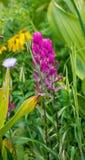 花在Ouray 库存照片