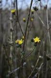 花在Vacaresti自然公园,布加勒斯特,罗马尼亚 库存图片