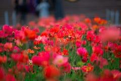 花场面在旧金山 免版税库存照片