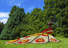 花孔雀在庭院里 免版税图库摄影