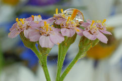 花宏观射击,在植物的下落的下落和植物 图库摄影