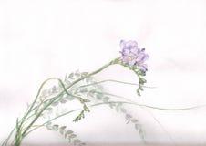 花小苍兰绘画水彩 免版税图库摄影