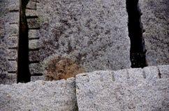 花岗岩块和正方形创造的线在防堤的在Ogden指向,维多利亚, BC 免版税库存照片