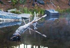 花岗岩猎物 免版税库存照片