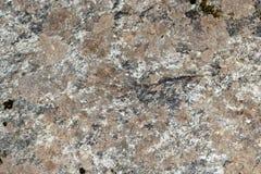 花岗岩褐色和白色 免版税图库摄影